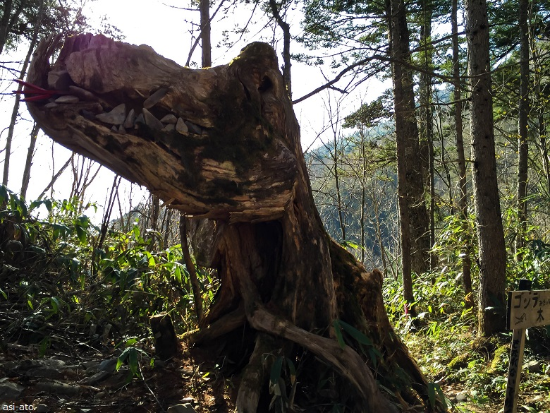 ゴジラみたいな木