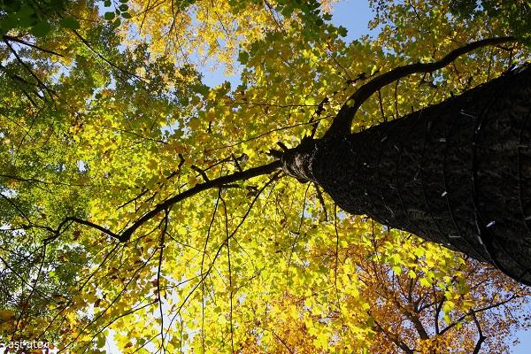 森林公園 紅葉見ナイト