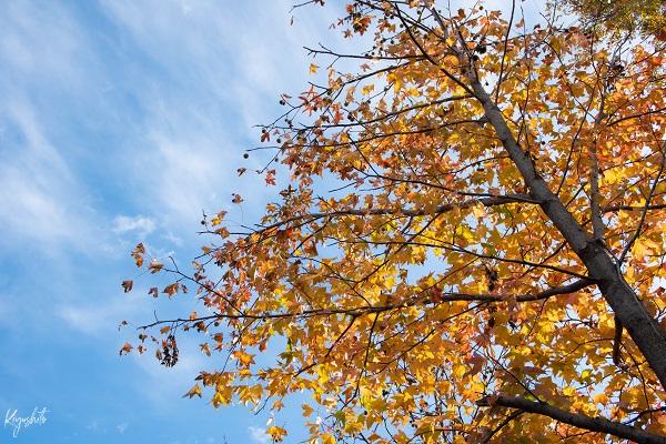 大宮公園 紅葉