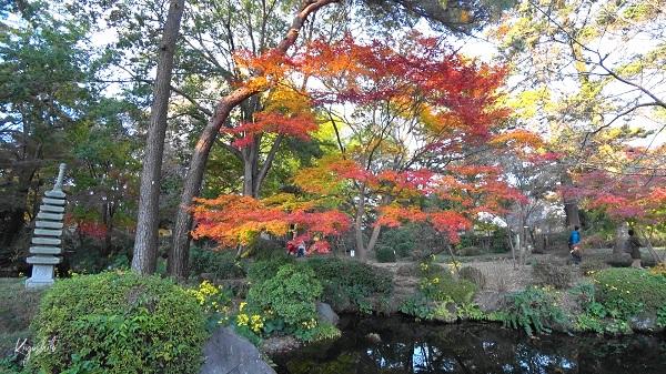 大宮公園 日本庭園